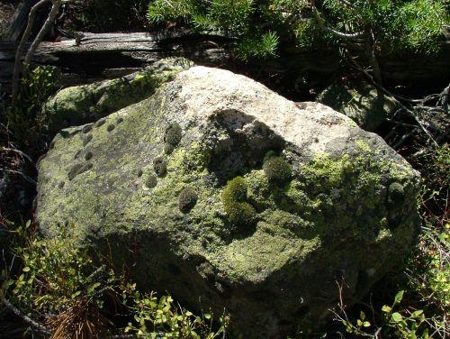 moss rock lichen