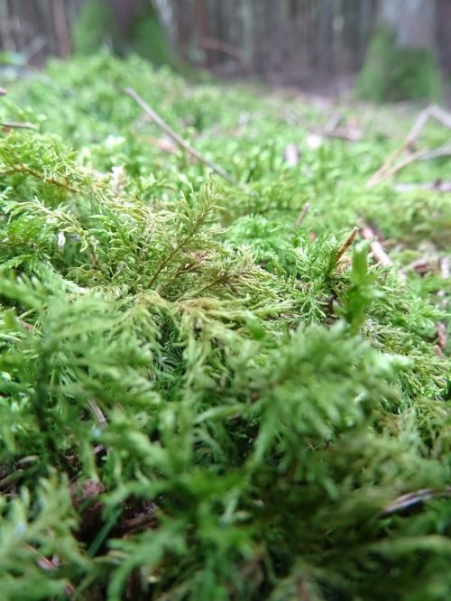 moss forest nature
