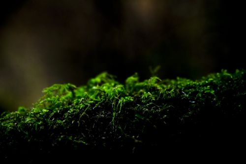 Moss Closeup On A Log