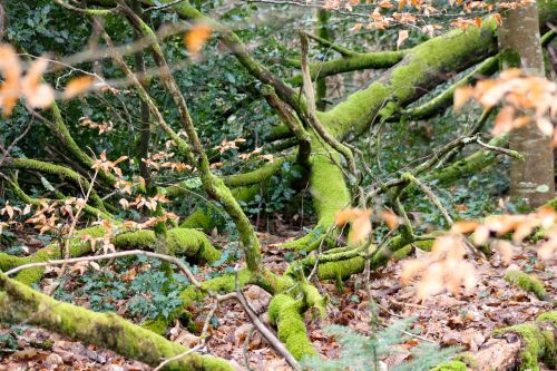 moss covered branches woodland tangle fallen branches