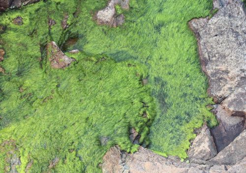 Moss Growing On Rock Boulder
