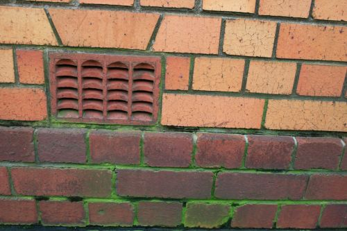 Moss In Grooves Between Bricks