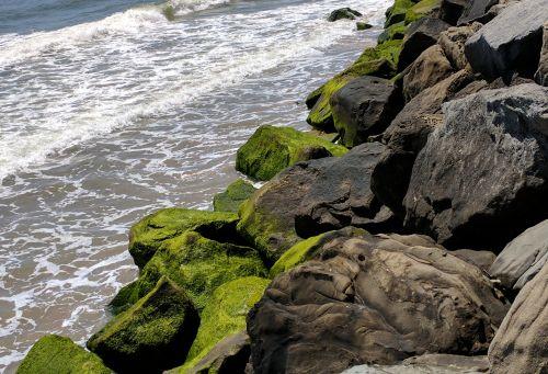 vandenynas, jūra, papludimys, kraštovaizdis, akmenys, vanduo, bangos, Rokas, gamta, samanos, samanos, žalias, augalas, samanos uolose