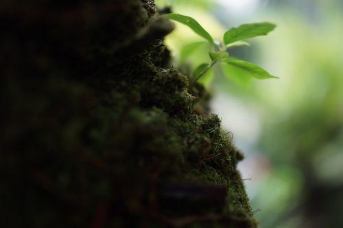 mosses non-vascular plants herbaceous
