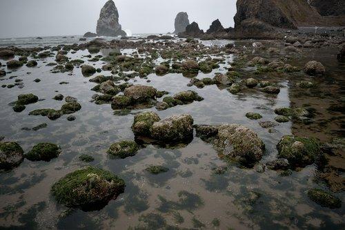 mossy  rocks  tide pool