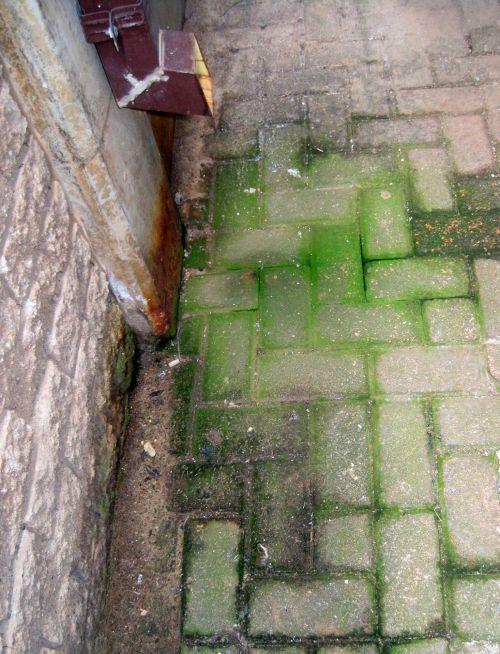 Mossy Corner