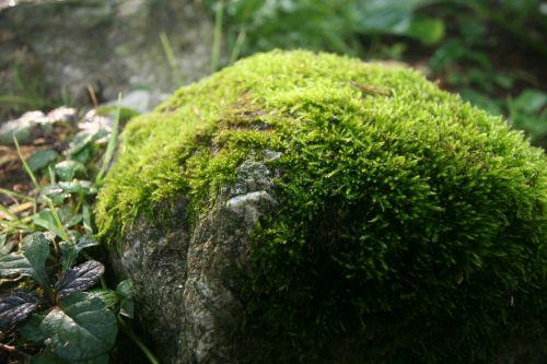 mossy rock spring green