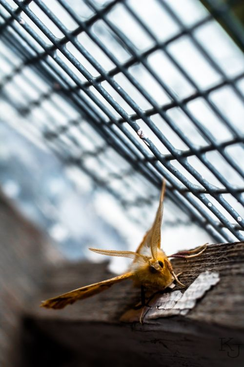 moth,window,summer,story,nature,insect,beautiful,beauty in nature,ecology,living nature