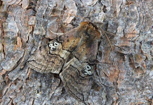 moth macro insect