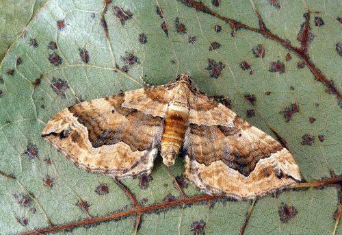 moth close up nature
