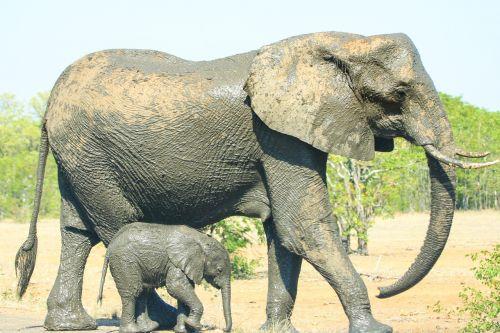 mother child elephant