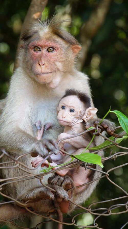 motherhood monkey life animal child