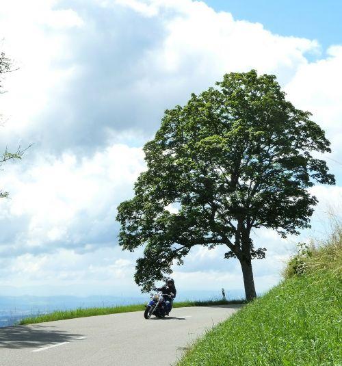 motociklas,vasara,medis,kreivė,debesis,žalias,mėlynas,perspektyva