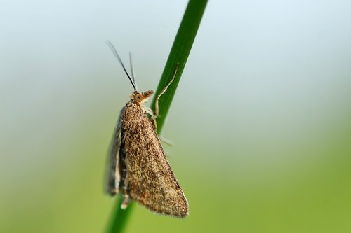 motte  butterfly  insect