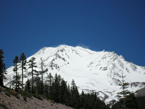 mount shasta mountain trees
