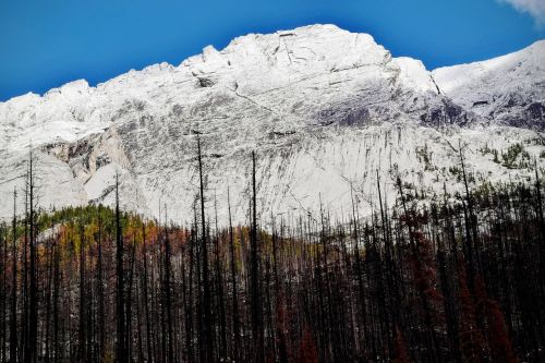 mountain trees nature