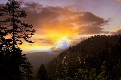 kalnas,pušis,twilight,saulėlydis