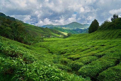 mountain nature taylor