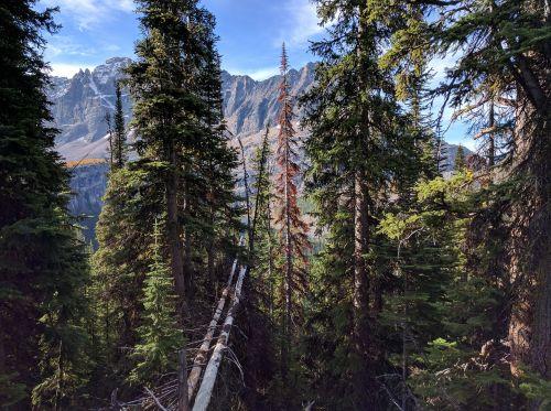 mountain mountains alberta
