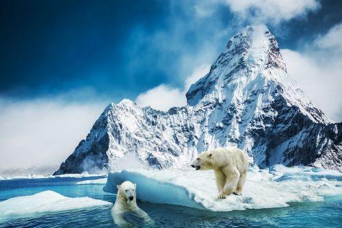 mountain polar bear glass