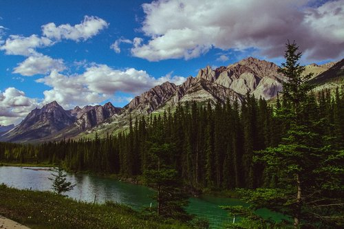 mountain  forest  rockies