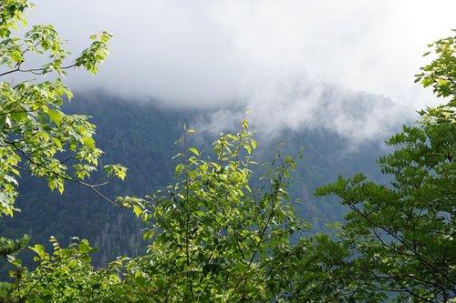 mountain  fog  trees