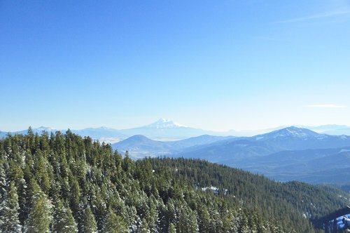 mountain  shasta  forest