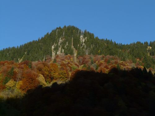 mountain autumn forest