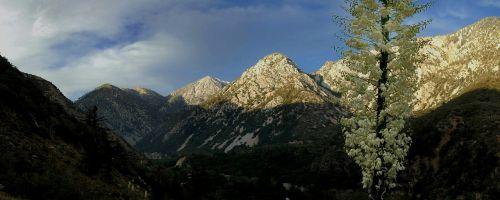 mountain yucca landscape