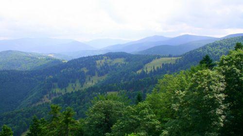gamta, medžiai, žalias, sluoksniai, kalnas, romanija, vaizdas, kalnų sluoksniai