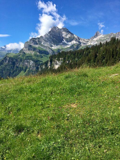mountain meadow mountain glarus