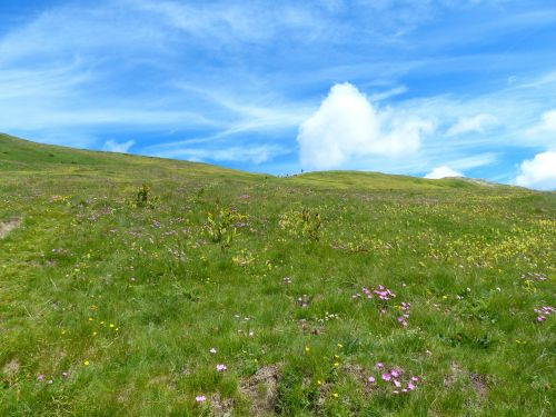 mountain meadow meadow grassy slope