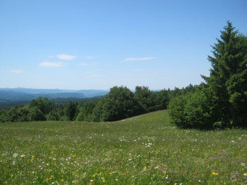 mountain meadow meadow summer meadow