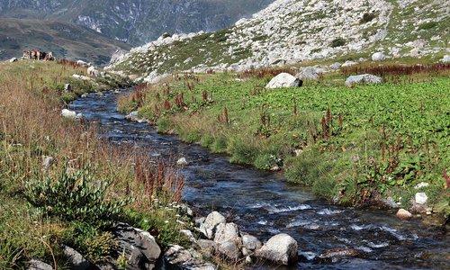 mountain river  mountain meadow  mountains