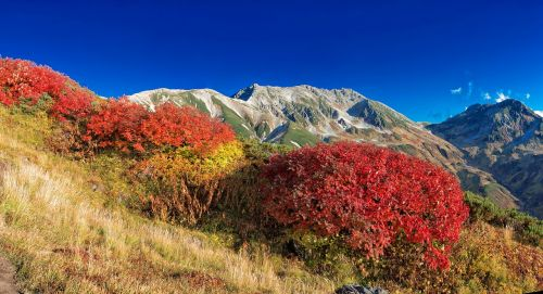 mountainous landscape autumnal leaves autumn