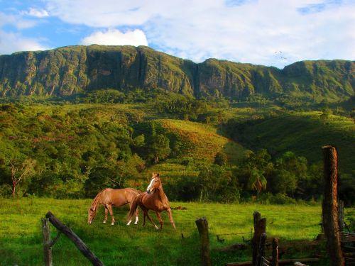 mountains serra vegetation