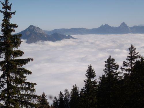 mountains fog tree