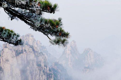 mountains fir tree evergreens