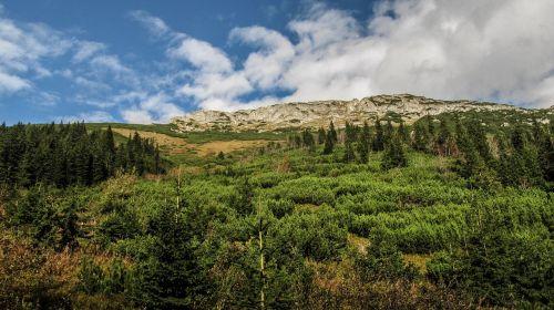 mountains tree landscape