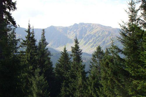 mountains pines landscape