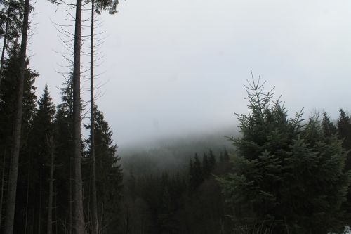 mountains fog the carpathians