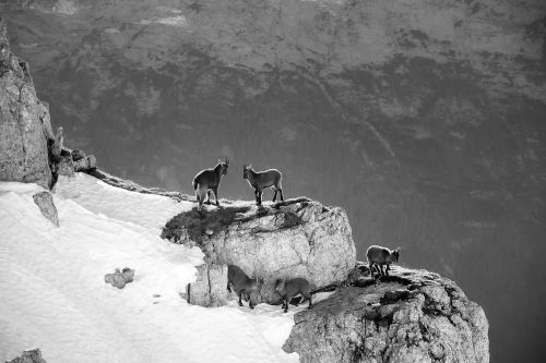 mountains mountain goats slovenia