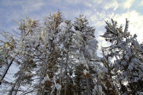 mountains tree winter