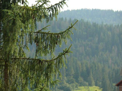 mountains nature ukraine