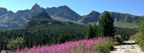 kalnai,takas,kraštovaizdis,tatry,Lenkija,gamta,takas