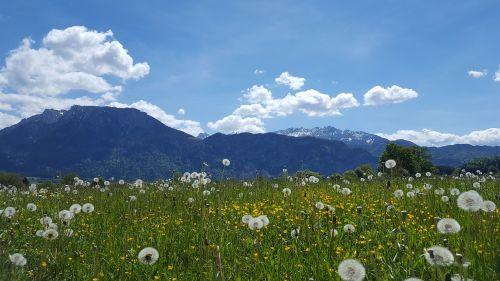 mountains tyrol landscape