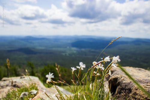 mountains mountain flower