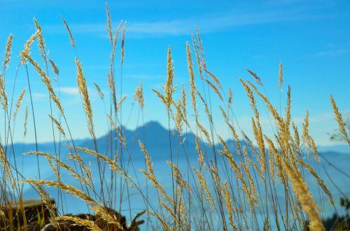 mountains foresight alpine