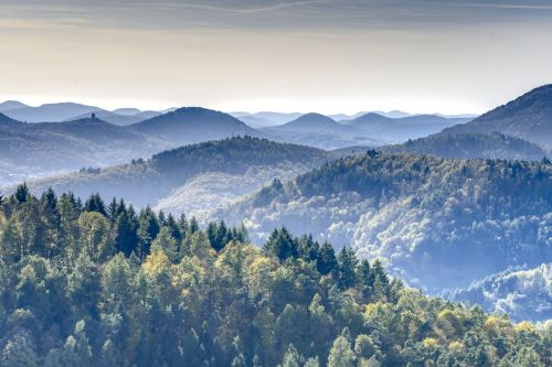 mountains forest palatinate