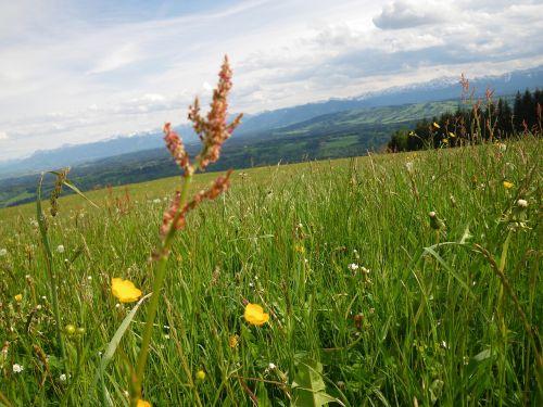 mountains spring sorrel